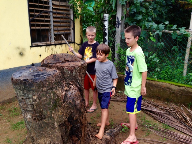 boys playing with stump in back yard. They discover it's infested with something...